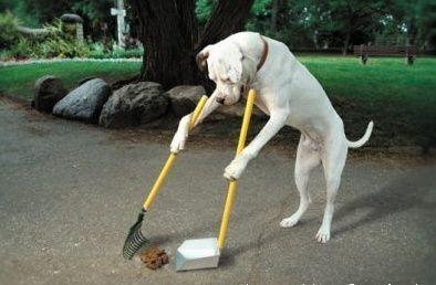 cão higiênico