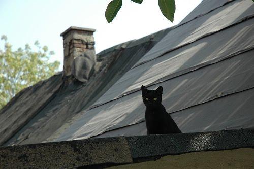 O Gato Subiu no Telhado 990